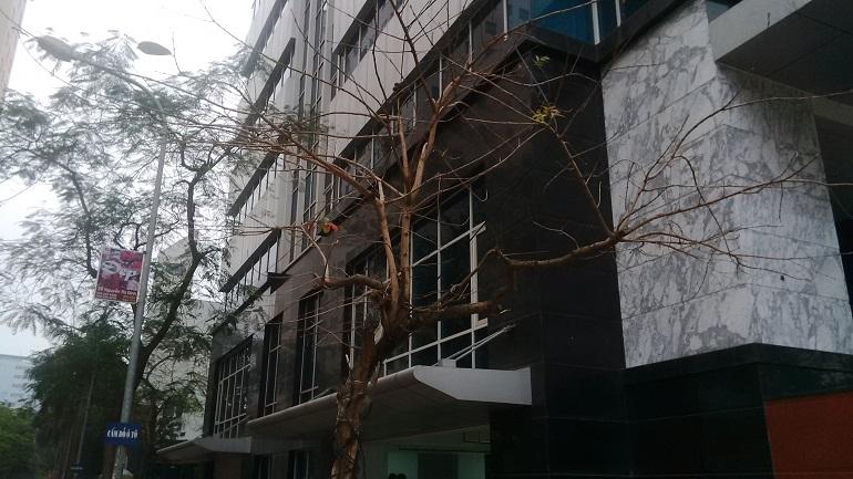 cho thuê văn phòng tòa 319 tower (5)